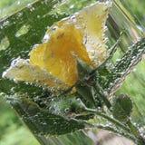 Rosa del amarillo con las burbujas del agua en un florero de vidrio Imagen de archivo