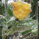 Rosa del amarillo con las burbujas del agua en un florero de vidrio Imágenes de archivo libres de regalías