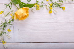 Rosa del amarillo en el fondo de madera blanco David Austin Rose Golden Celebration fotografía de archivo