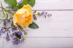 Rosa del amarillo en el fondo de madera blanco David Austin Rose Golden Celebration Imagen de archivo