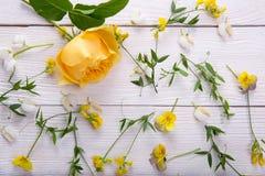 Rosa del amarillo en el fondo de madera blanco David Austin Rose Golden Celebration Fotografía de archivo libre de regalías