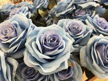 Rosa del azul de la belleza por la tela Fotos de archivo libres de regalías