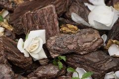 Rosa del blanco en el fondo de la corteza Foco selectivo, imagen entonada, efecto de la película Fotos de archivo libres de regalías