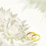 Rosa del blanco y anillos de bodas Fotos de archivo