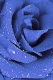 Rosa del blu nelle gocce di acqua Immagine Stock Libera da Diritti