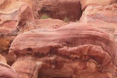 Rosa del color en el Petra Imagenes de archivo