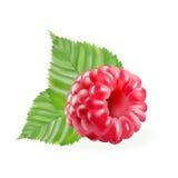 Rosa del pastel aislada stock de ilustración