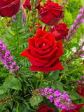 Rosa del rojo Foto de archivo