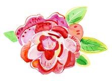 Rosa del rojo aislada en el fondo blanco Pintura de la acuarela ilustración del vector