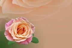 Rosa del rojo con la hoja verde Imagen de archivo libre de regalías