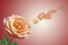 Rosa del rojo con la hoja verde Fotos de archivo