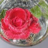 Rosa del rojo con las burbujas del agua en un florero de vidrio Foto de archivo
