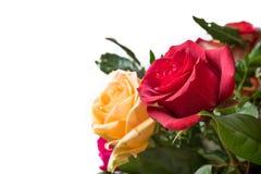 Rosa del rojo en bouqet Fotografía de archivo libre de regalías