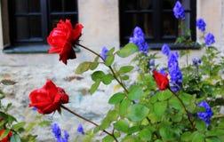 Rosa del rojo en el castillo alemán Fotografía de archivo libre de regalías