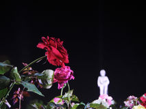 Rosa del rojo en el cielo nocturno para el rama 6to Fotos de archivo