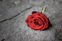 Rosa del rojo en el piso imagenes de archivo