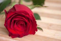 Rosa del rojo en el tablero de madera Fotos de archivo libres de regalías