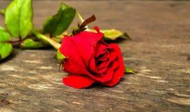 Rosa del rojo en el tablero de madera Foto de archivo libre de regalías