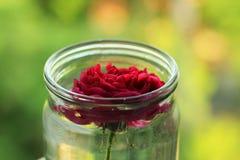 Rosa del rojo en el tarro de cristal en fondo verde Foto de archivo libre de regalías