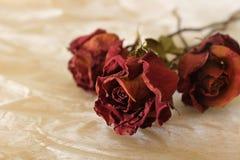 Rosa del rojo en fondo caliente foto de archivo libre de regalías