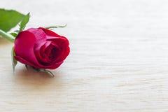Rosa del rojo en fondo de madera Imágenes de archivo libres de regalías