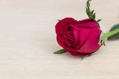 Rosa del rojo en fondo de madera Fotos de archivo