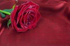 Rosa del rojo en la seda Fotografía de archivo libre de regalías