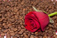 Rosa del rojo en los granos de café Foto de archivo