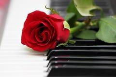 Rosa del rojo en piano, amor y música Fotos de archivo libres de regalías