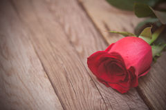 Rosa del rojo en un fondo de madera oscuro Día de Women s, tarjetas del día de San Valentín D Imágenes de archivo libres de regalías