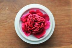 Rosa del rojo en una tapa del té en fondo de madera Fotografía de archivo
