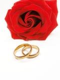 Rosa del rojo y anillos de bodas Foto de archivo libre de regalías