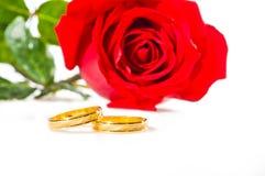 Rosa del rojo y anillos de bodas sobre blanco fotografía de archivo