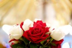 Rosa del rojo y rosa del blanco foto de archivo libre de regalías