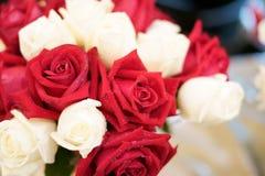Rosa del rojo y rosa del blanco imágenes de archivo libres de regalías