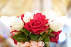 Rosa del rojo y rosa del blanco fotografía de archivo libre de regalías