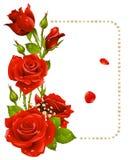 Rosa del rojo y marco de las perlas Imagenes de archivo