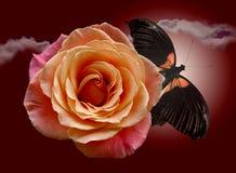 Rosa del rojo y mariposa darkenning Fotografía de archivo