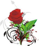 Rosa del rojo y ramitas decorativas Imagenes de archivo