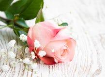 Rosa del rosa Imagenes de archivo