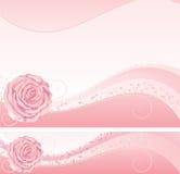 Rosa del rosa Fotos de archivo