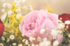 Rosa del rosa - arriba detallada Imagen de archivo