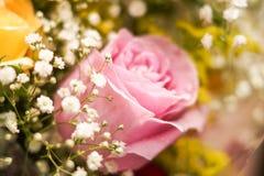 Rosa del rosa - arriba detallada Fotos de archivo