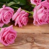 Rosa del rosa como fondo fotos de archivo libres de regalías