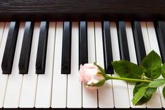 Rosa del rosa en el teclado de piano Fotos de archivo