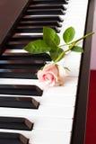 Rosa del rosa en piano Fotos de archivo libres de regalías