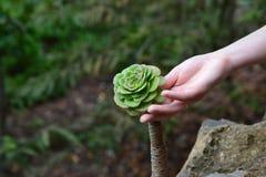 Rosa del verde Fotografía de archivo
