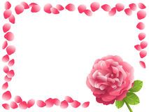 Rosa dentellare Fotografie Stock