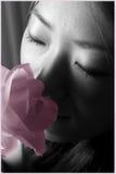 Rosa dentellare Fotografia Stock Libera da Diritti