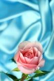 Rosa dentellare su raso blu Fotografie Stock